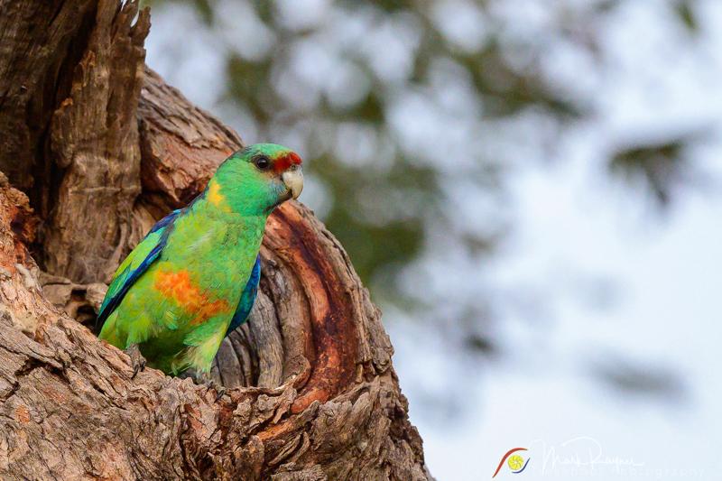20200911 180507 Charlotte Plains Birds DSC 5012