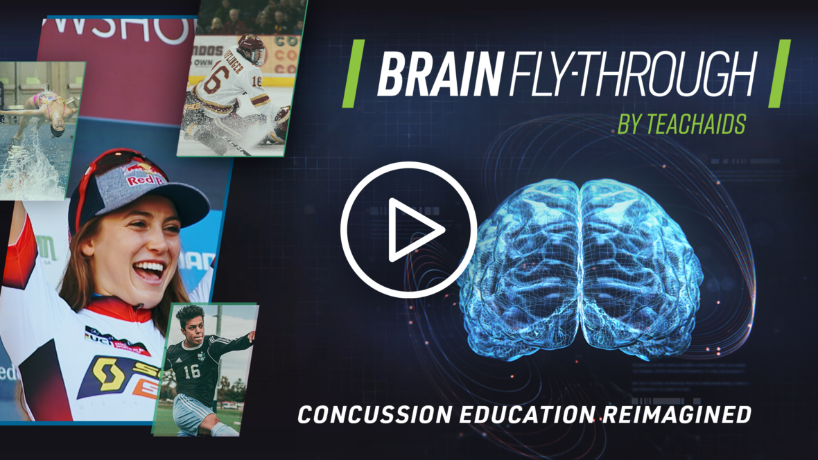 CrashCourse Brain Fly-Through Thumbnail