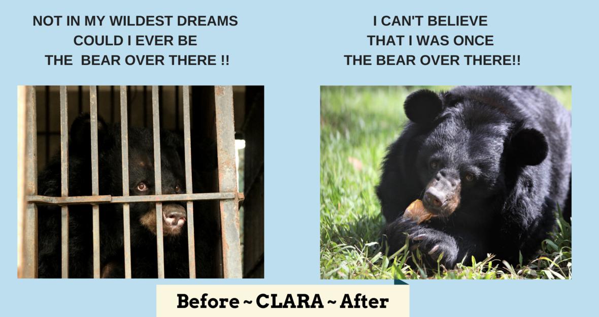 B A-Clara