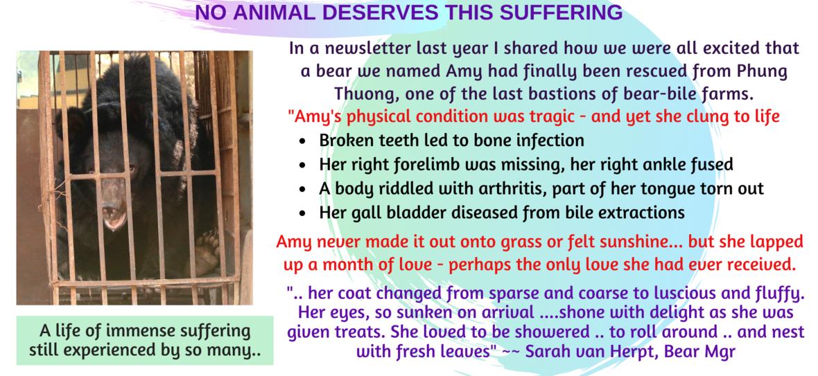 Amy RIP