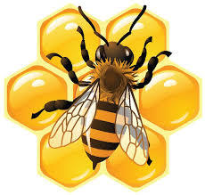 honey bee 3