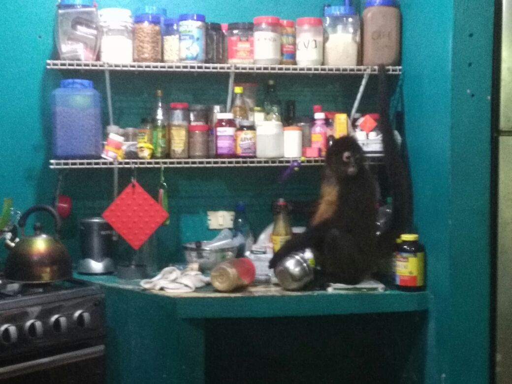Sweetie sitting on our counter with a bottle of honey in hand