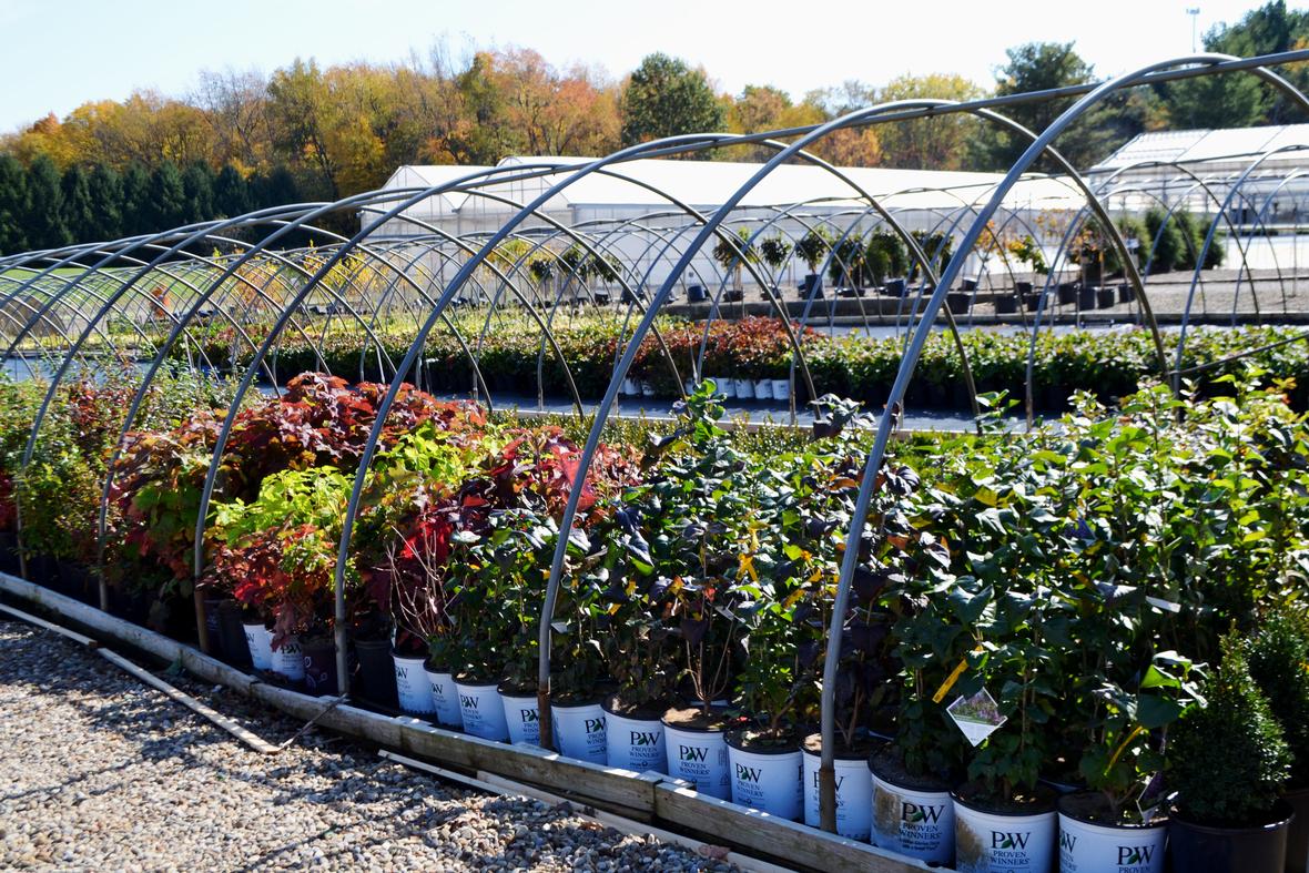 plants put away hoop house fall 2020