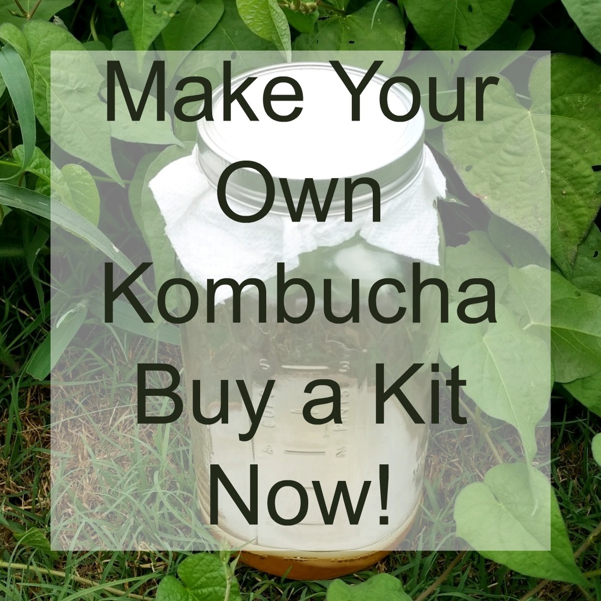 kombucha-kit-rancho-alegre-farm-1