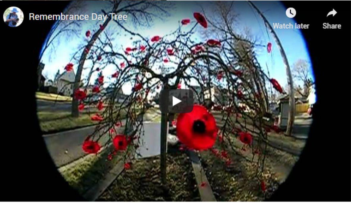 rememberance tree video