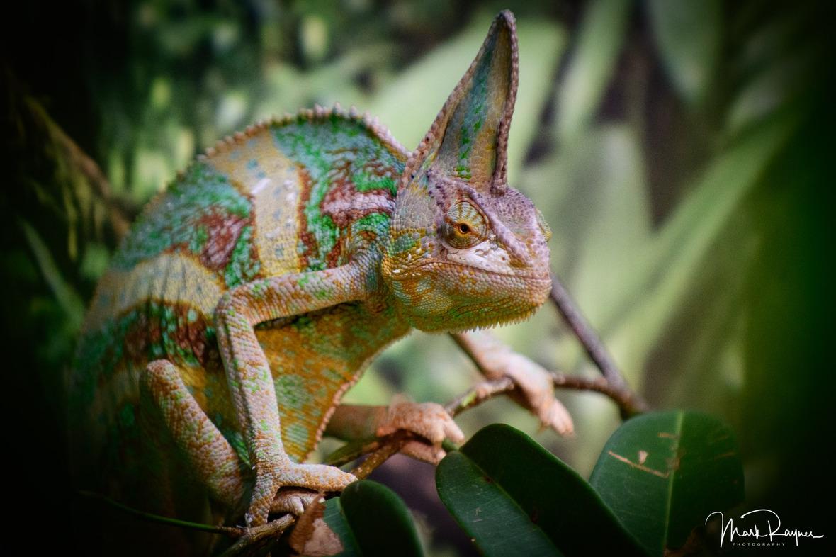 20180602 160318 Australia Zoo