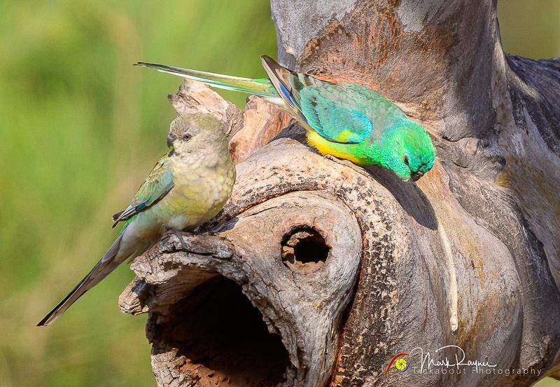 Wildlife Birds Landscape Outback Queensland-1-42