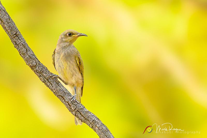 Wildlife Birds Landscape Outback Queensland-1-51