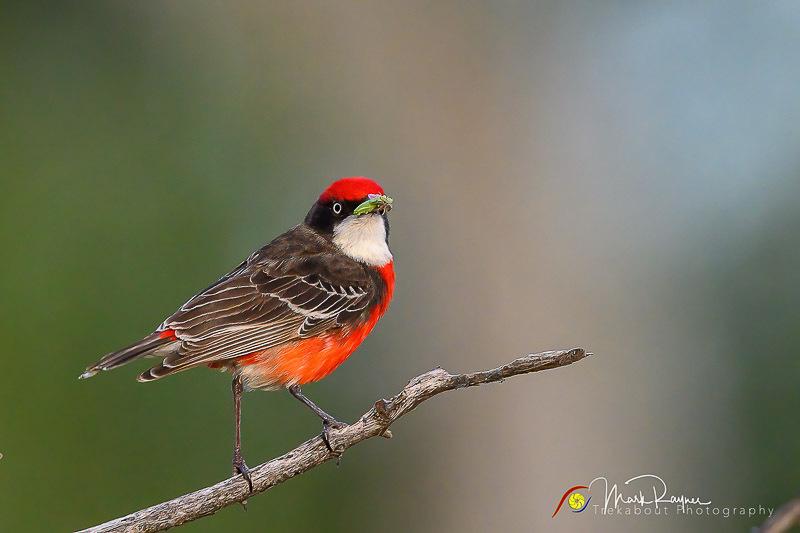 Wildlife Birds Landscape Outback Queensland-1-52