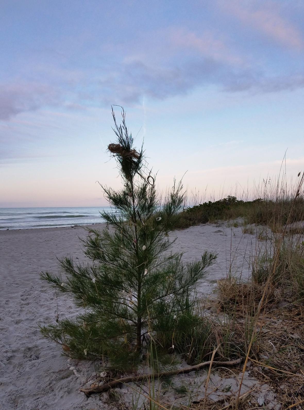 Newsletter Christmas Tree Dec 2020 035