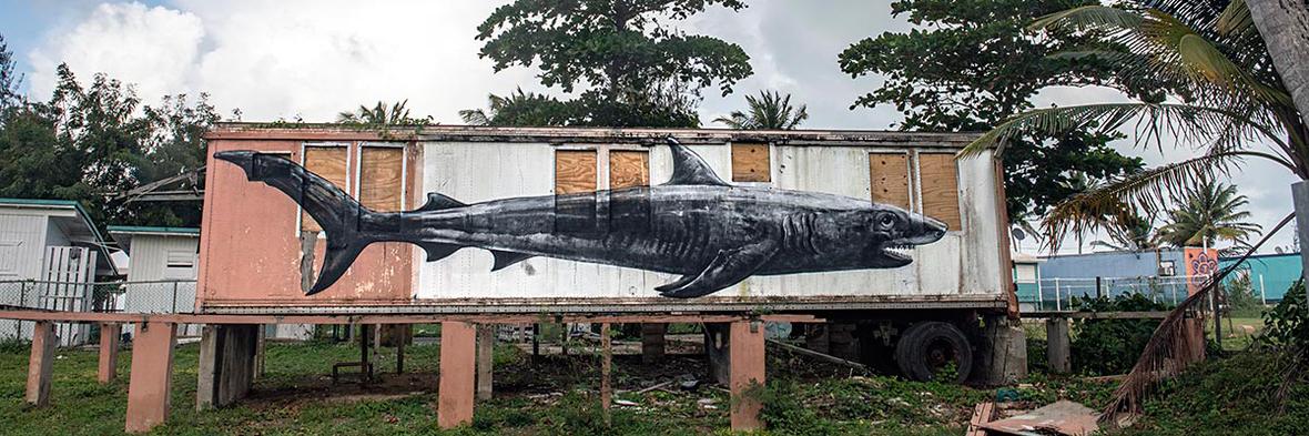 brooklyn-street-art-ROA-martha-cooper-puerto-rico-2020-web-11
