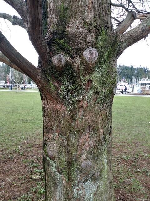 tree deva patricia smith-stanley park