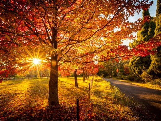 Autumn australia