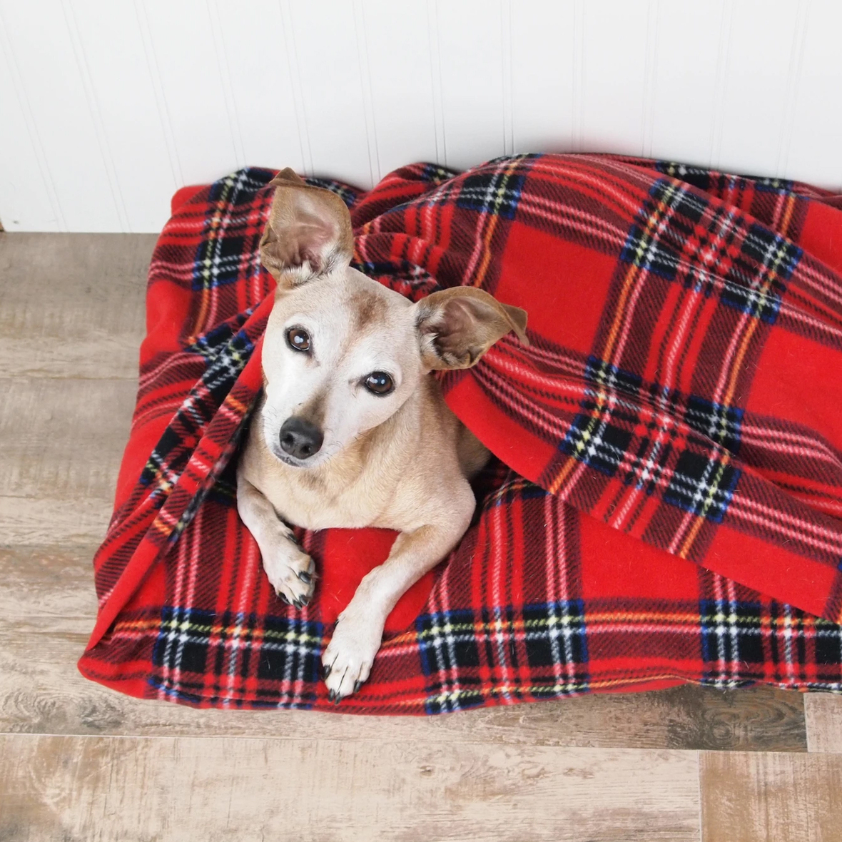 sallie tomato dog bed
