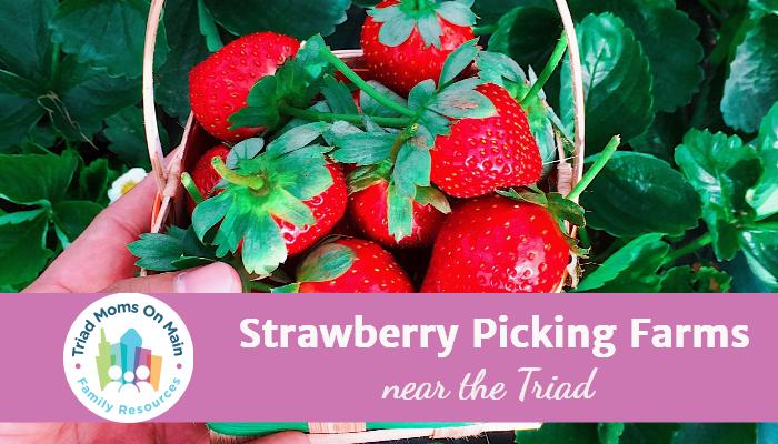 strawberries-1 1
