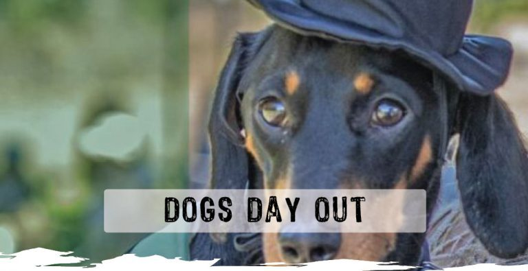 Dogs-Day-out-web-768x395