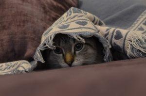 hiding-under-blanket-300x198