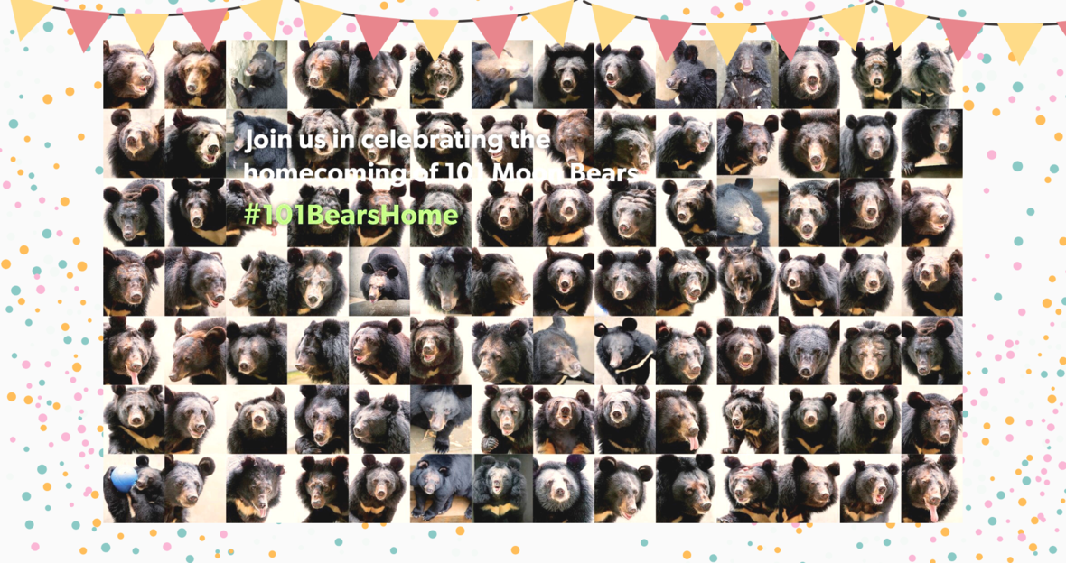 101 bears photo
