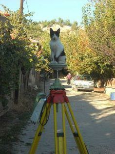 kitty surveyor