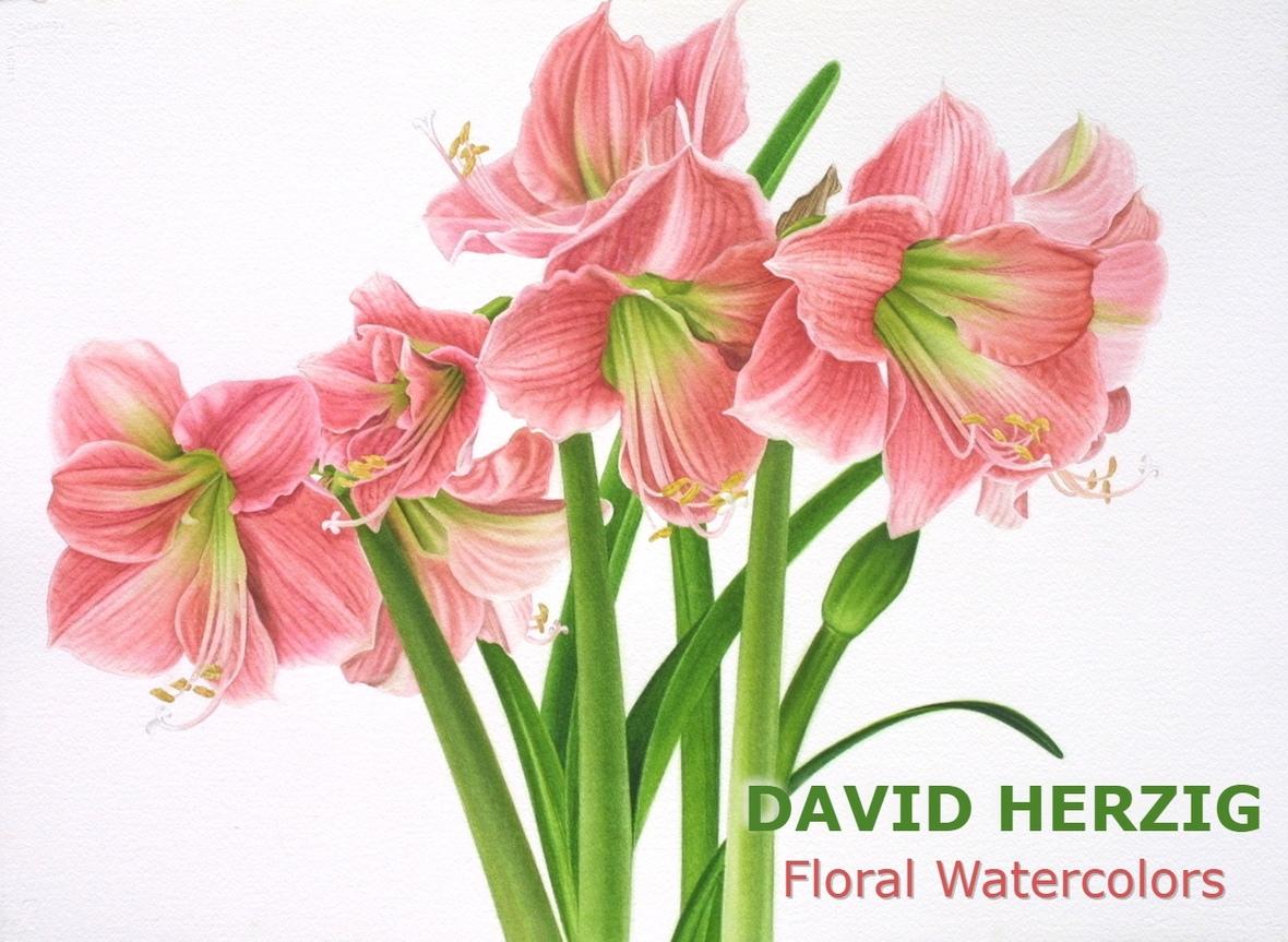 Pink Amaryllis banner