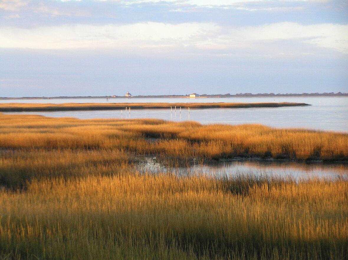 Salt-marsh-Toms-Cove-Virginia-Chincoteague-National