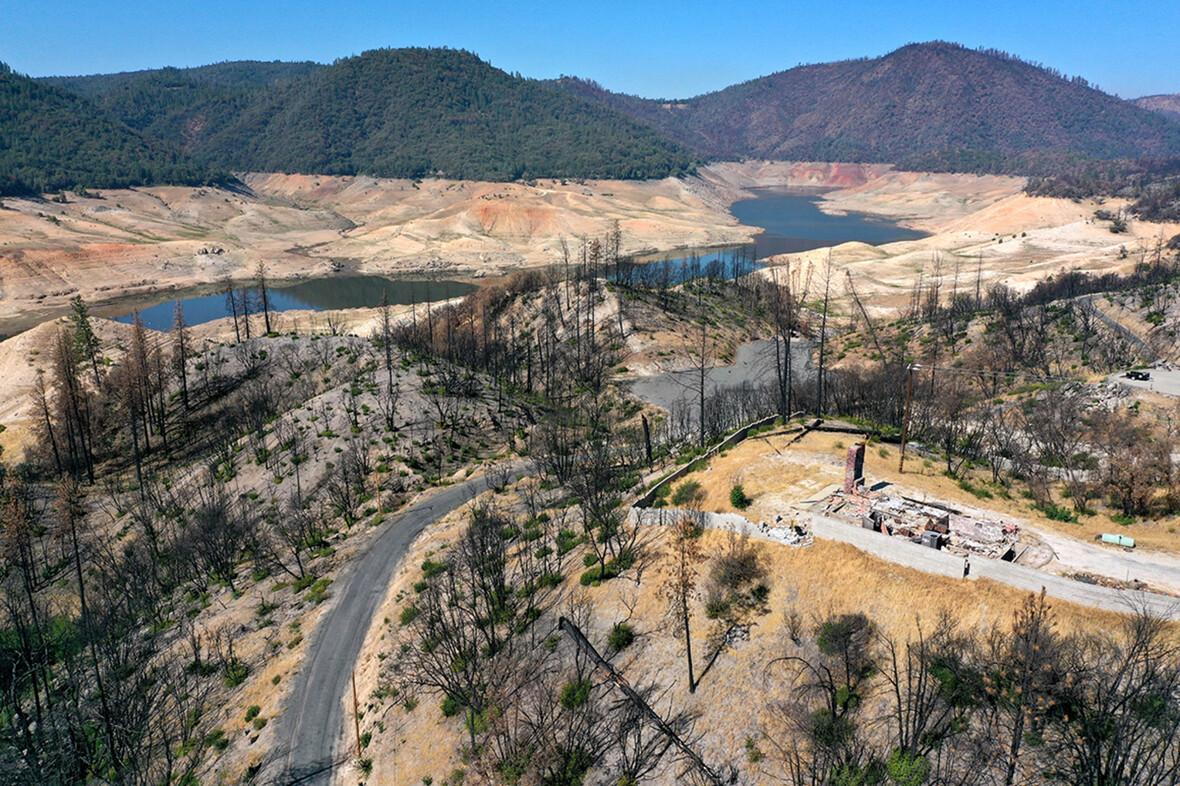 treesburned