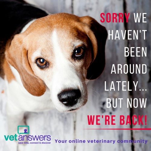 Sorry we haven t been around lately - Vetanswers Blog 500x500