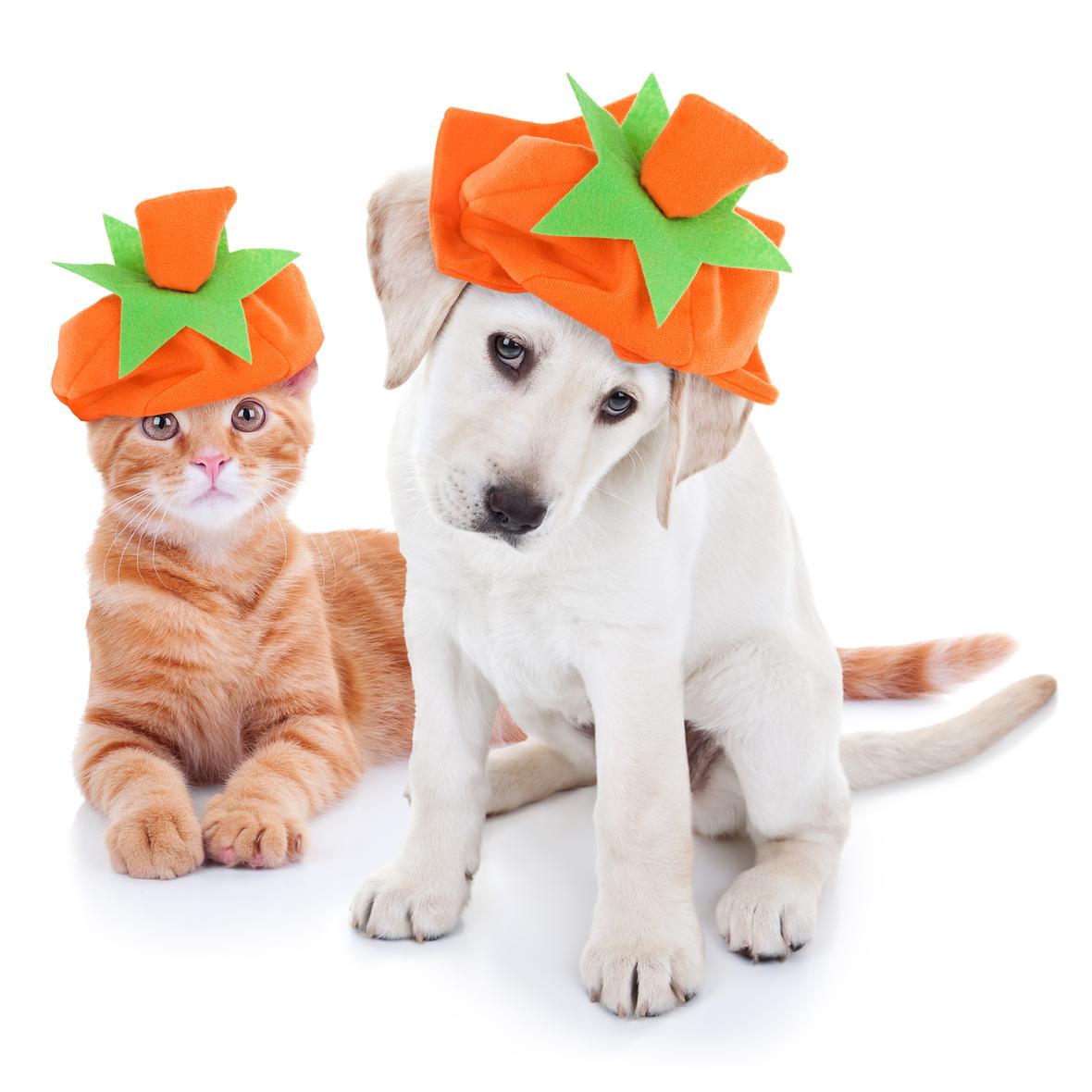 thanksgiving dog cat