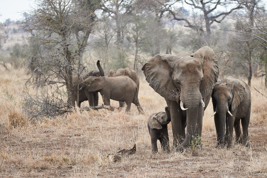 Kruger NP 004