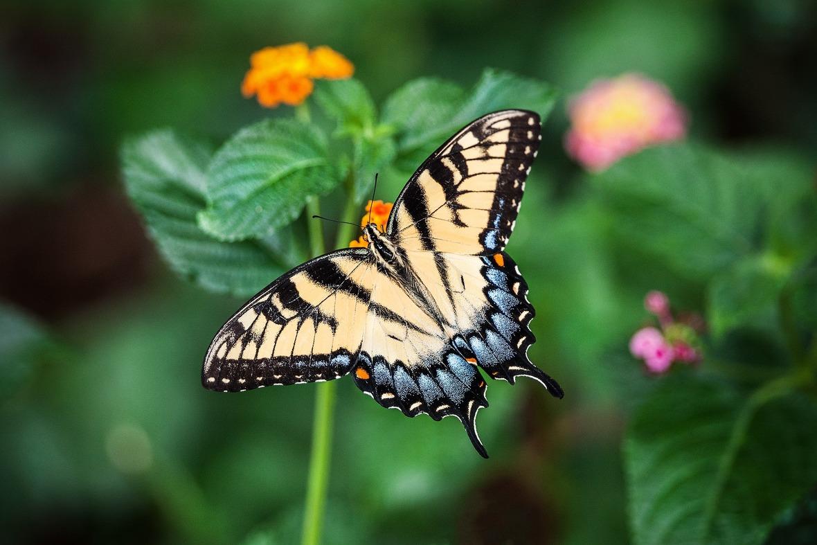 butterfly-1391809 1920