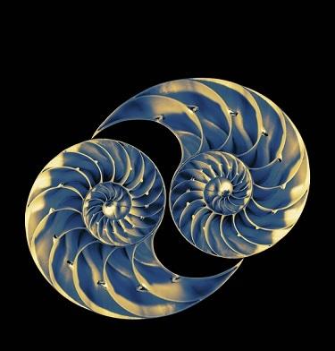 dreamstime s 36146849 - nautilus resize