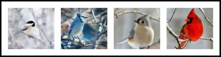 Bird photo collage