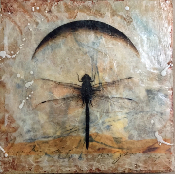 encasutic dragonfly