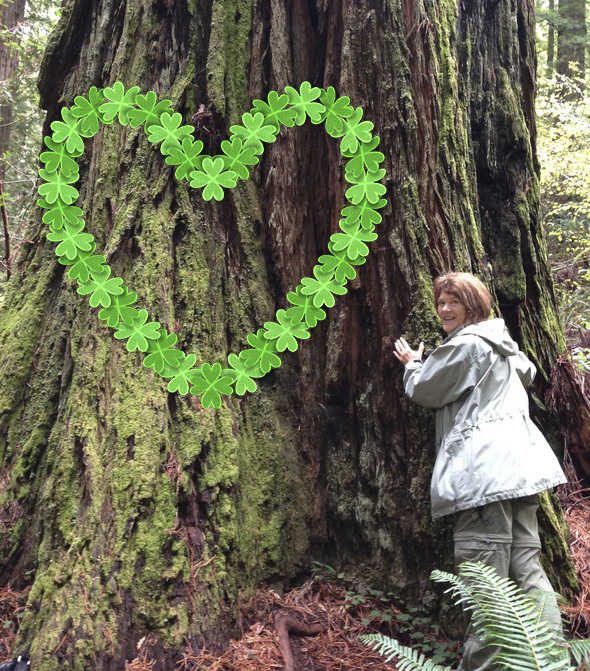 Giant-Redwood-tree-heart-cropped