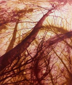 Trees-drop1-250x295