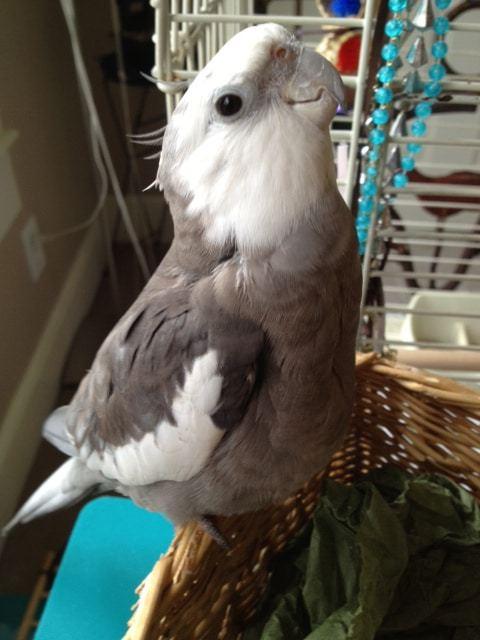 Happyeasterbird