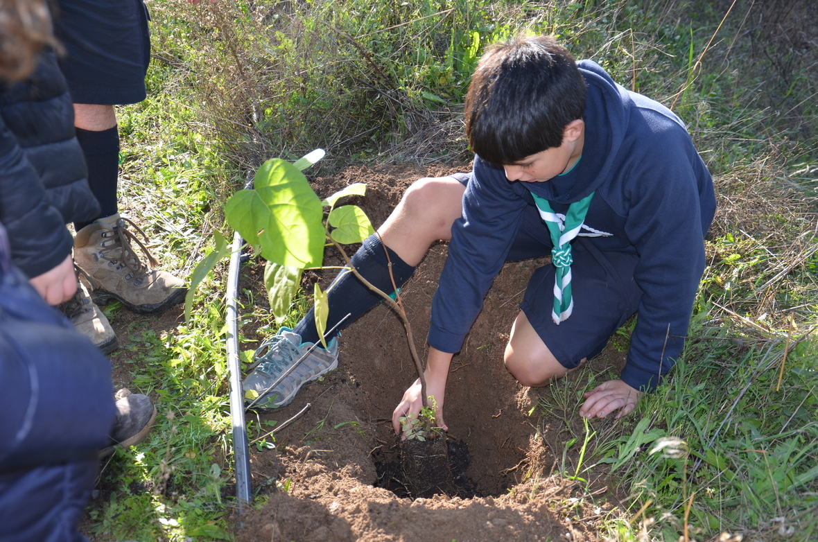 PlantarArvores