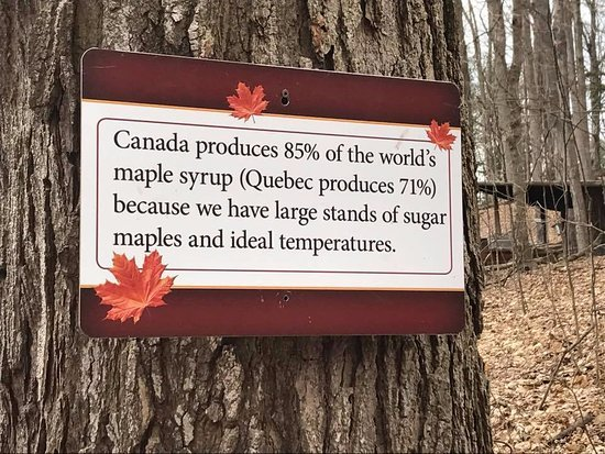 amazing-maple-syrup-festival