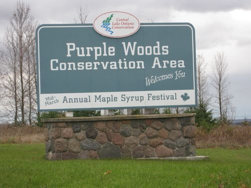 purplewoodssign