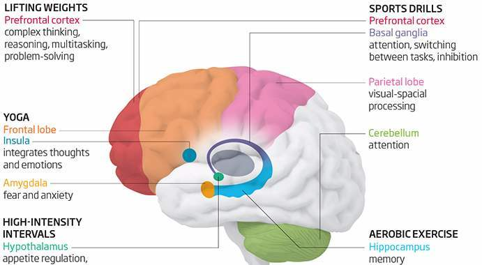 brain-exercise-diagram