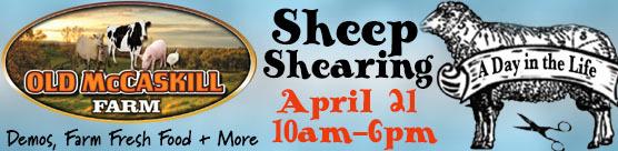 mccaskill-farm-sheep-shearing