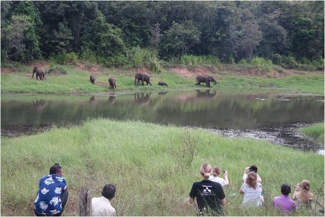 Sophie Omer Mcwalter Observing Elephants at WG Tank
