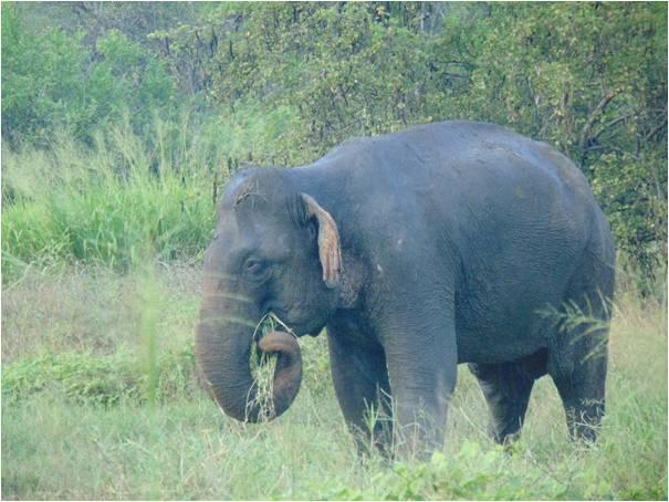 Bryony Dimmer Observing Elephants