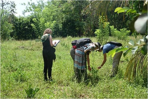 Lisanne Hoftijzer Recording Caterpillar Damage on Orange Trees