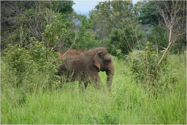Lisanne Hoftijzer Elephants at the Tree Hut
