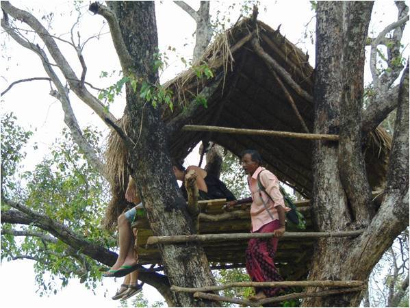 Lisanne Hoftijzer At the Tree Hut