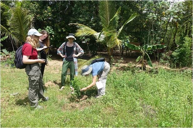 Rachel Rosenbloom Monitoring Orange Trees