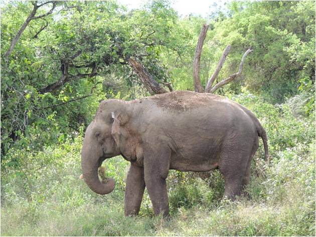 04. Erwan JEZEQUEL Bull elephant by Tree Hut
