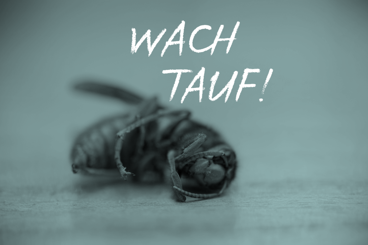 Tote-Wespe