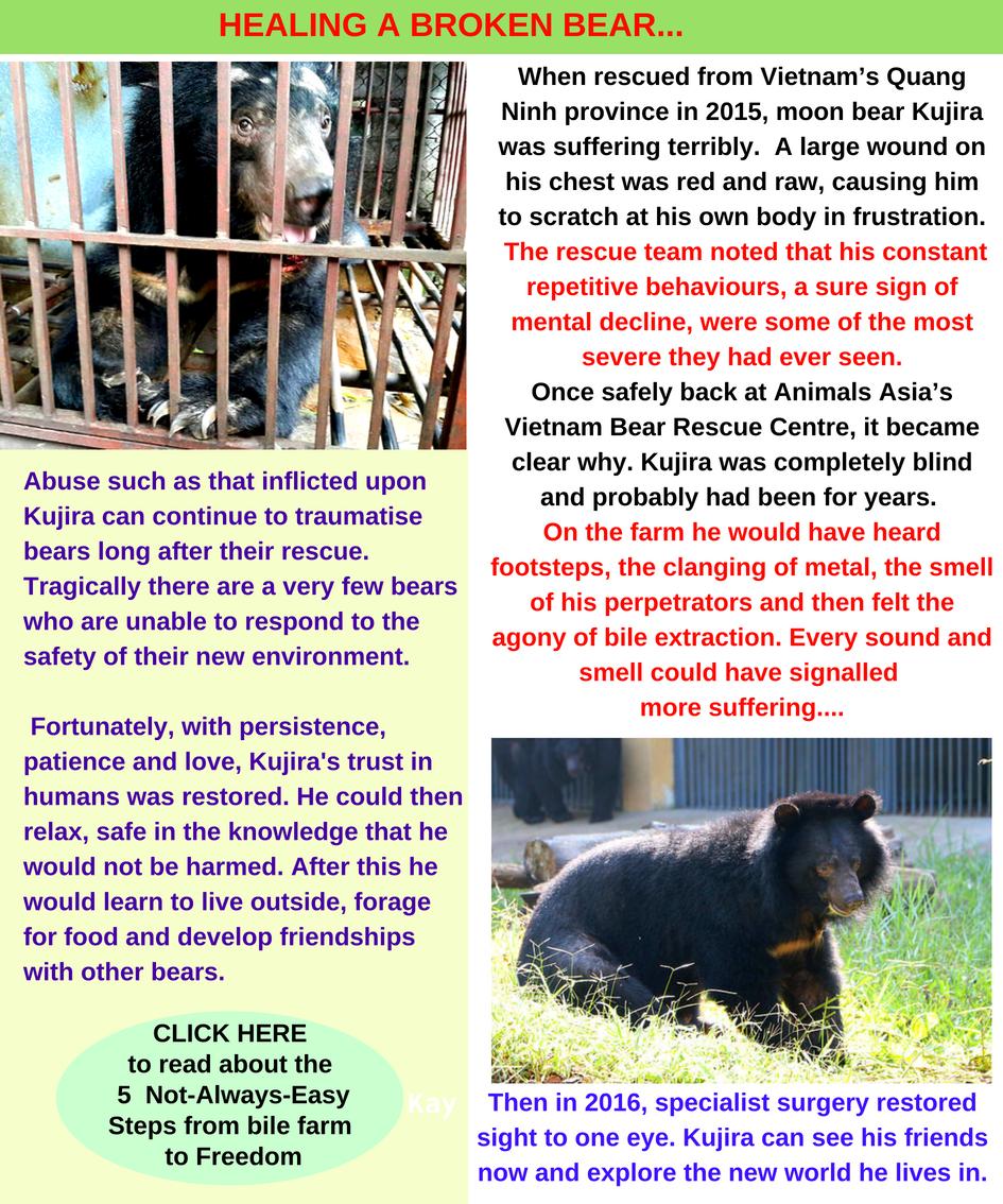 healing a broken bear